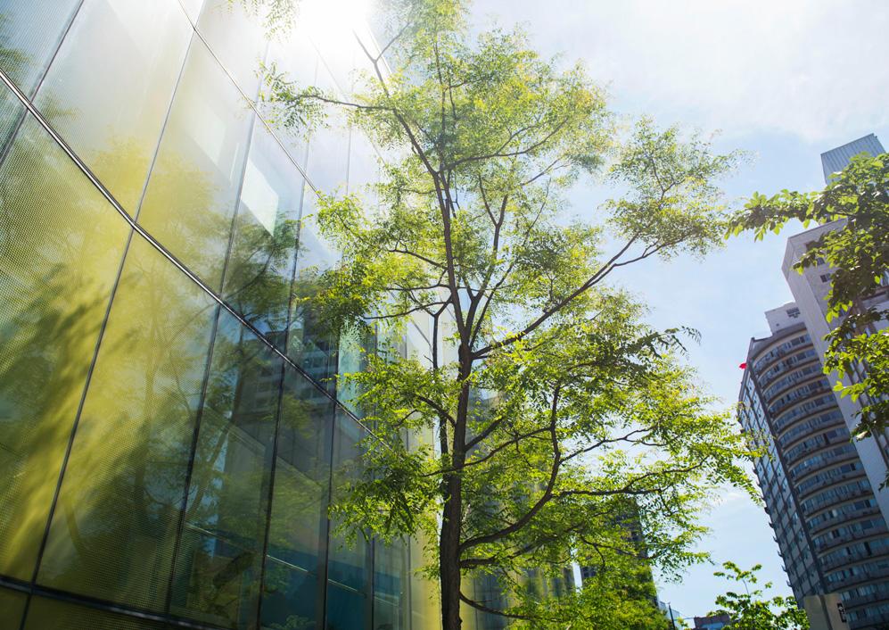 La forêt urbaine contribue à la réduction des îlots de chaleur, au contrôle des eaux de surface et à une meilleure qualité de l'air. Photo: Nathalie St-Pierre